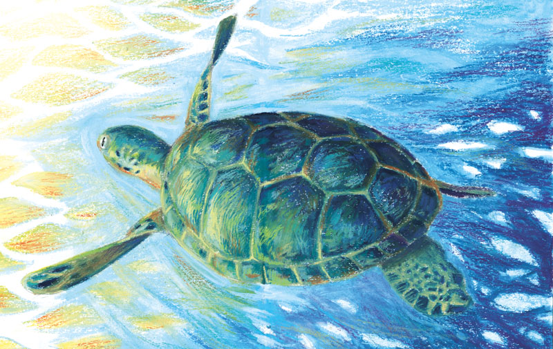 tomatedemer_illustration_tortue_fdenisse_web